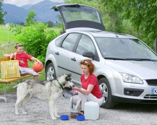 Service: Tiere gehören nicht auf den Beifahrersitz