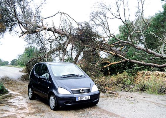 Urteil: Behörde haftet für herabstürzende Äste eines Straßenbaums