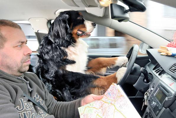 Meldung zum 1. April: Bello ist der bessere Autofahrer