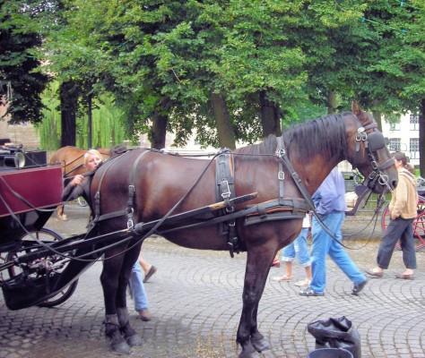 Strengere Auflagen für Berliner Kutscher