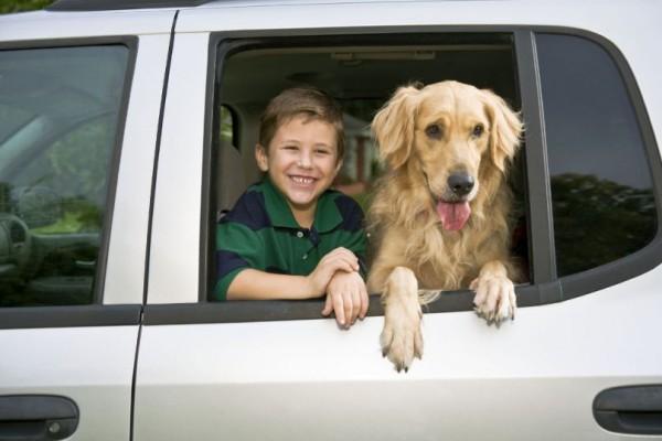 Recht: Hundehalter haftet auch für Erschrecken