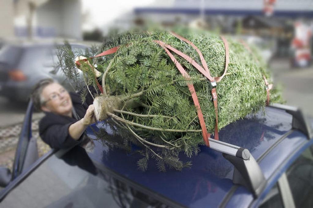 Ratgeber: Den Weihnachtsbaum im Auto sicher transportieren