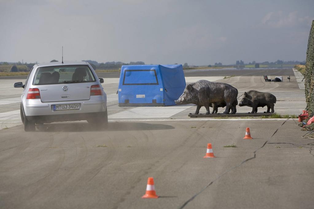 Wildtiere: Ausweichmanöver gefährlicher Zusammenprall
