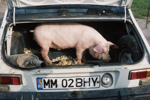 Essen im Auto kann krank machen. Bildquelle: http://manvotional.blogspot.com/