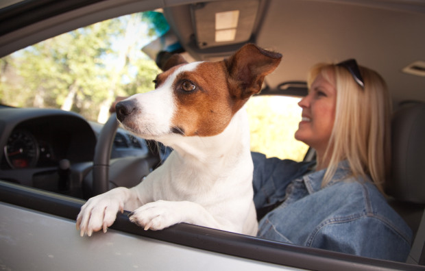 A.T.U: Hunde im Auto mit Schutzgitter transportieren