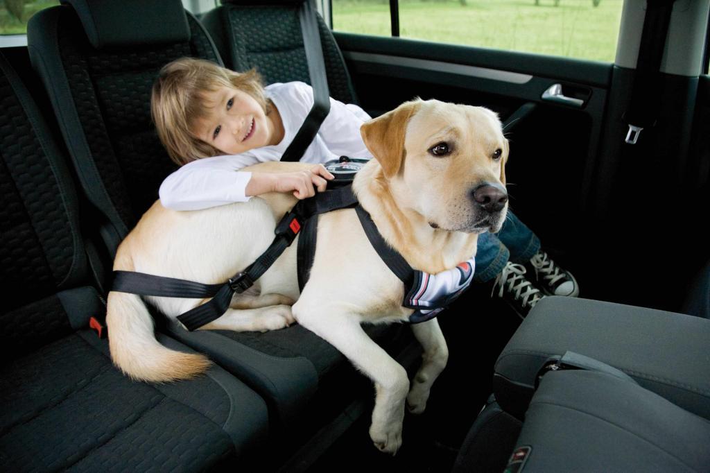 Hund im Auto – aber sicher!