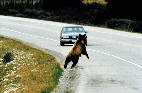Demnächst sollen Autofahrer rechtzeitig gewarnt werden, um Zusammenstöße mit Tieren zu verhindern