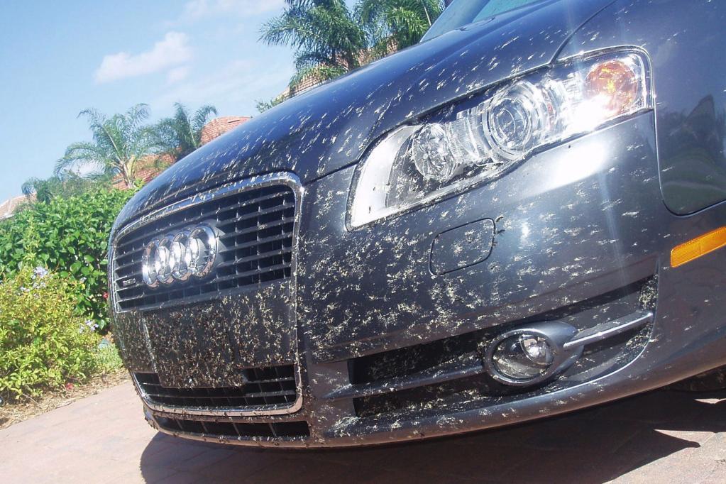 Nach dem Sommer heißt es für Autofahrer: Insekten-Leichen entfernen.
