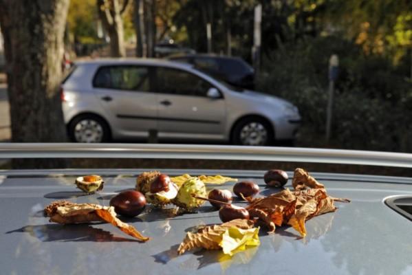 Recht: Vorsicht im Herbst - Nicht unter Kastanien parken