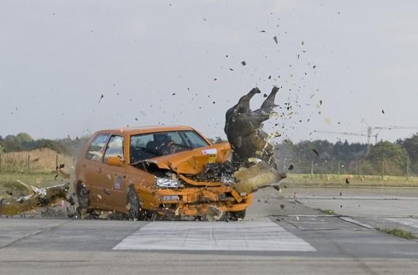Wildunfälle: Nur Langsamfahren verringert das Risiko