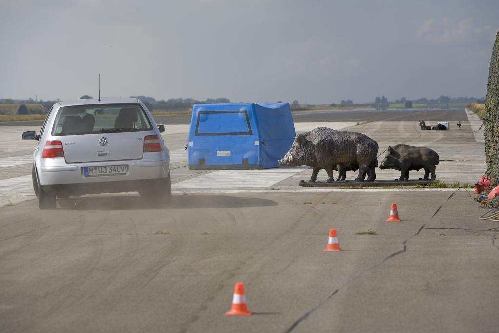 ADAC-Test: Unfallsimulation mit Wildschweinrotte.