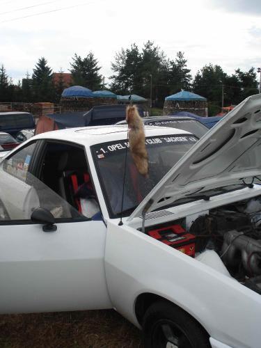 Vom Fondpassagier und der Hutablage – Auto-Begriffe, die 2011 keiner mehr kennt. Teil 1: VW-Blumenvase, Musikkasette, Fuchsschwanz und Wunderbaum.