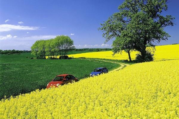 Neues Verfahren: Bald Diesel aus ''Biomüll''?