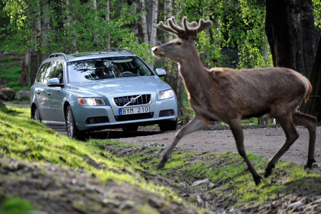 Volvos Notbremsassistent bremst auch für Tiere