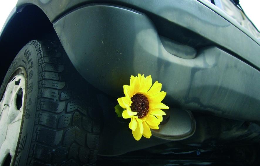Wie viel Öko steckt im Bio-Diesel?