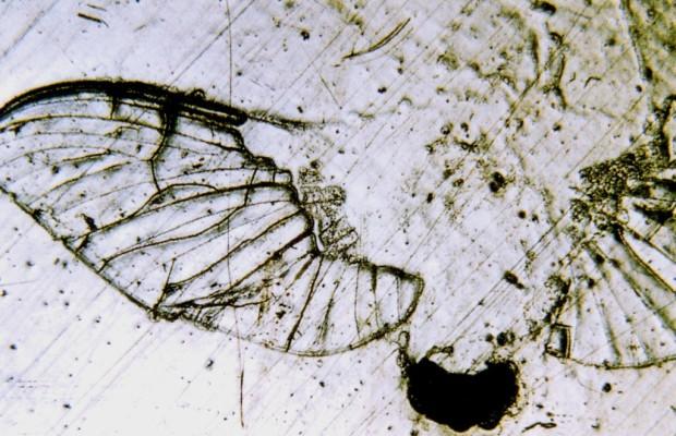 Insektenreiniger im Test - Keine große Hilfe
