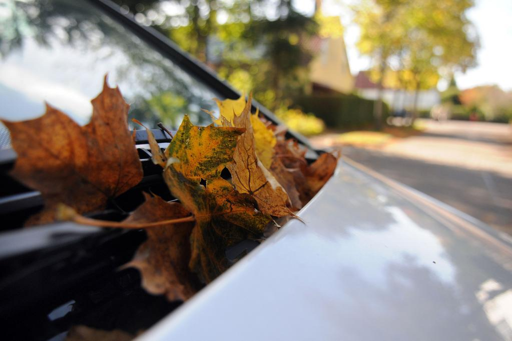 Trockenlegung fürs Auto