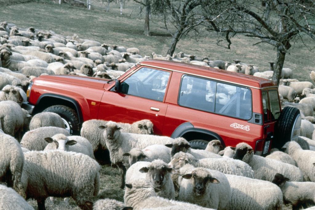 Unter Schafen: der Nissan Patrol GR
