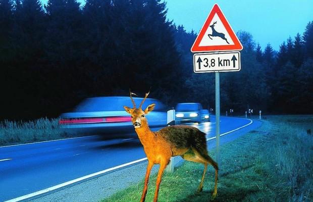 Ratgeber: Wildunfälle vermeiden