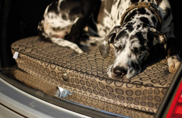 Kissen für den Hund - jetzt auch ergonomisch