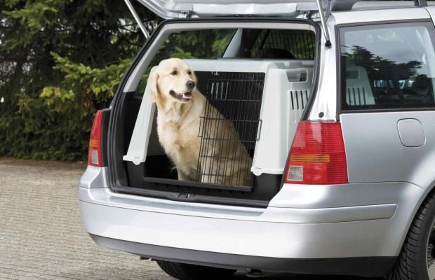 Ratgeber: Tiere im Auto - Hund und Katze auf großer Fahrt