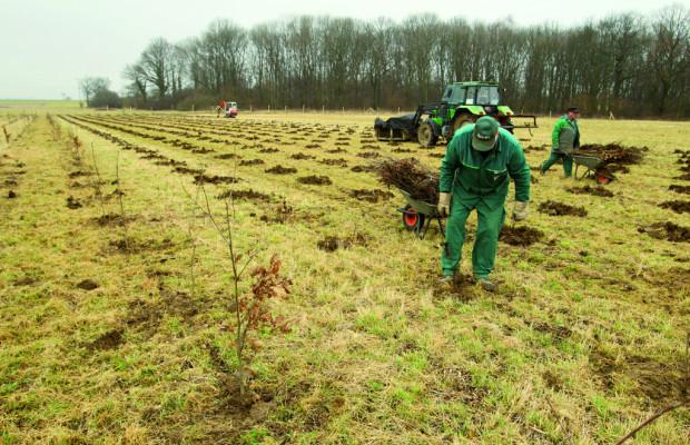 Volkswagen pflanzt neuen Wald in Essenrode