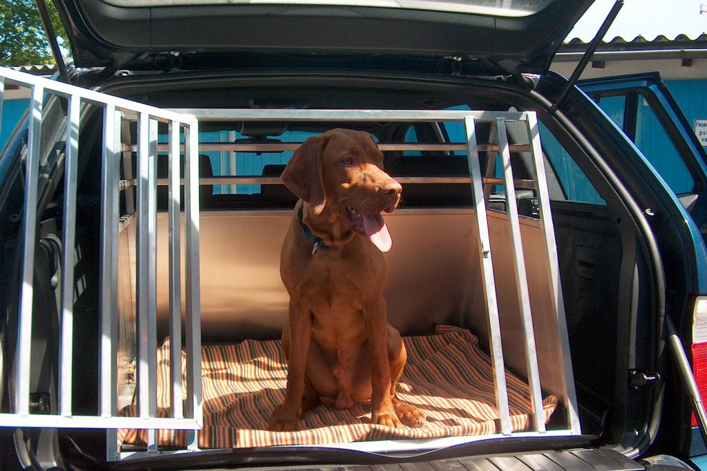 Tiere im Auto: Ab in die Transportbox