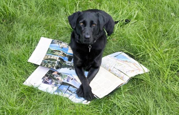 Hunde auf Reisen: Damit´s ein Prachturlaub wird