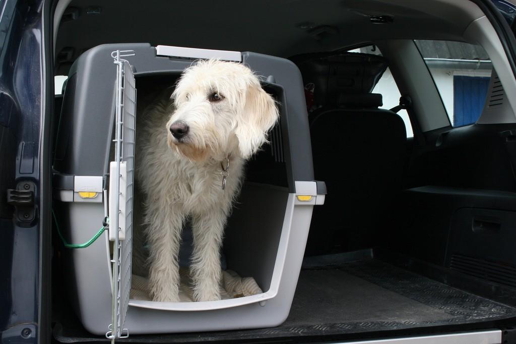 Ratgeber: Tiere sind rechtlich eine Ladung