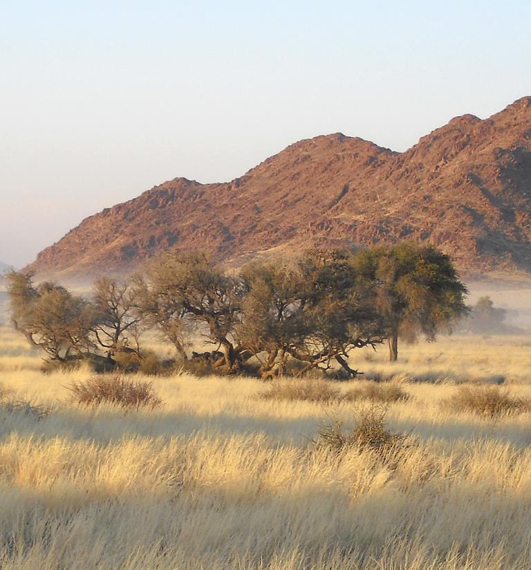 Morgenstimmung in der Savanne.