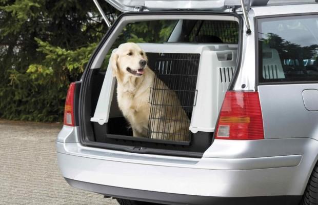 Ratgeber: Haustiere im Auto - So fährt der Vierbeiner sicher