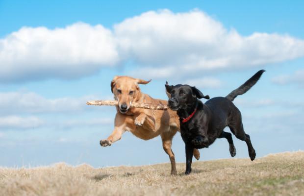 Ratgeber: Wenn ein Haustier angefahren wird - Kümmern und suchen