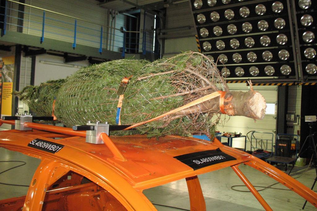 Weihnachtsbaum-Transport - Gut gesichert Richtung Wohnzimmer