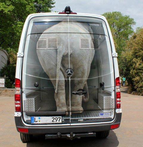 Elefantenstarke Werbung!