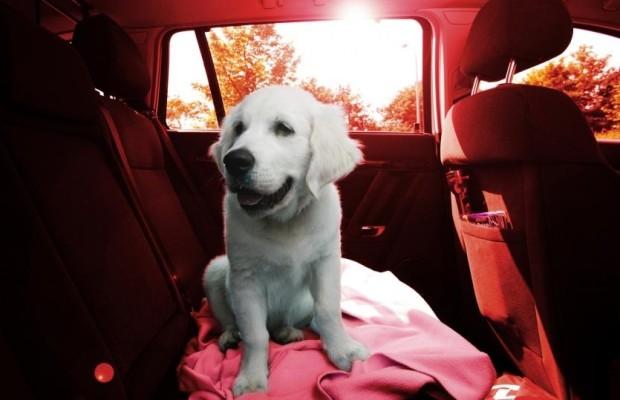 Hunde im Auto - Bellos gefährliche Hitzefalle