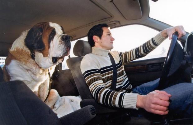 Haustiere im Auto verdoppeln das Unfallrisiko