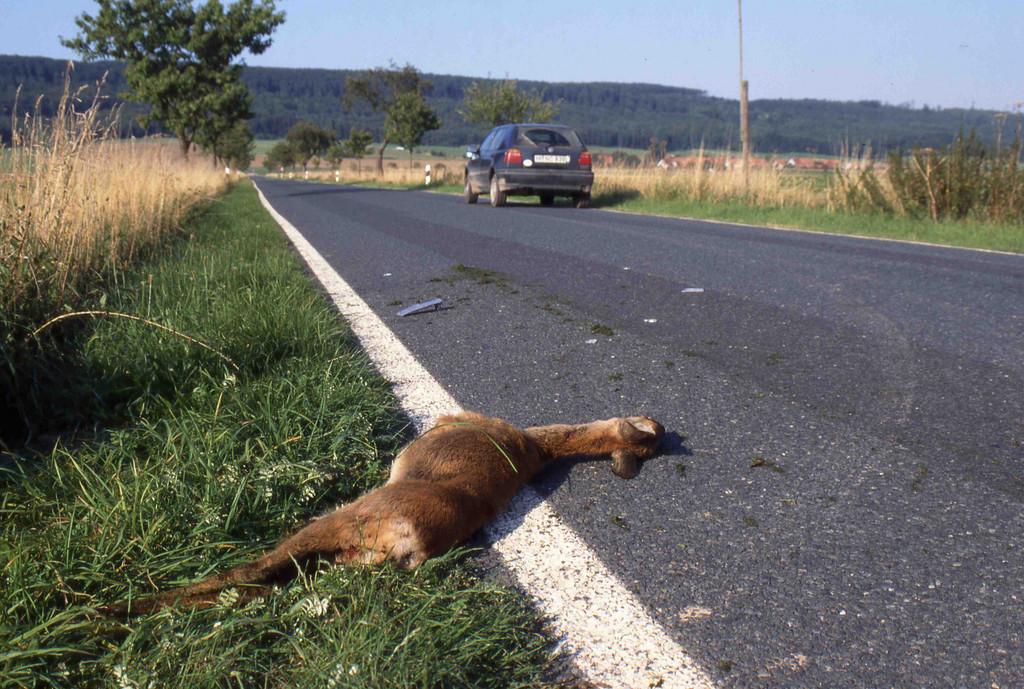 Ratgeber: Versicherungsschutz gegen Wildunfälle