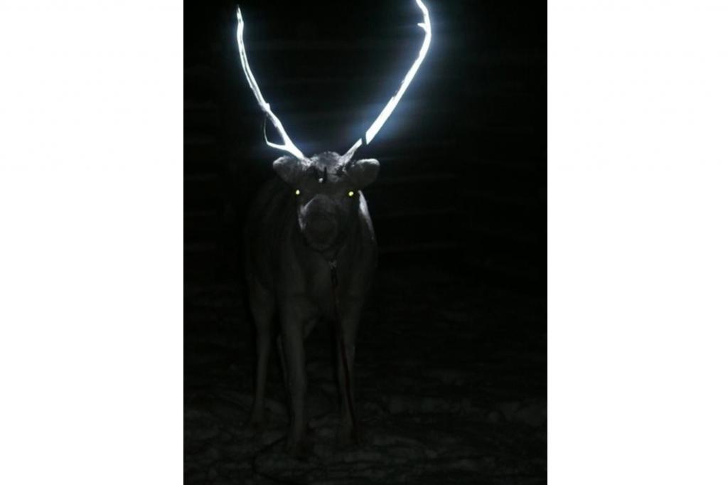 Gerät das Ren bei Dunkelheit in den Scheinwerferkegel eines Autos, leuchtet sein Geweih hell auf