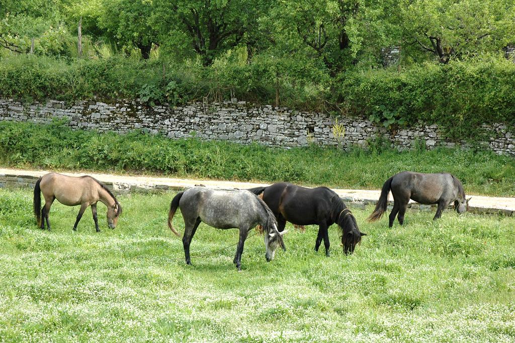 Pferde am Rand des Nationalparks der Vikos-Schlucht.