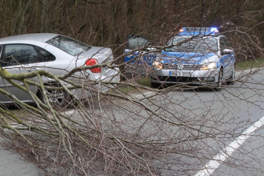 Recht: Verkehrssicherungspflicht der Kommune - Besser nicht unter Pappeln parken