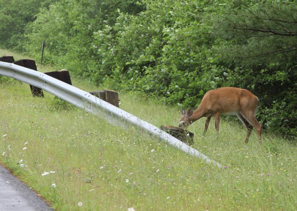 Wildwechsel: Tiere kennen keine Zeitumstellung