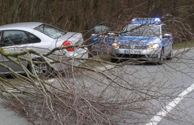 Ratgeber: Maibaum-Transport mit dem Auto - Ein sicherer Liebesbeweis