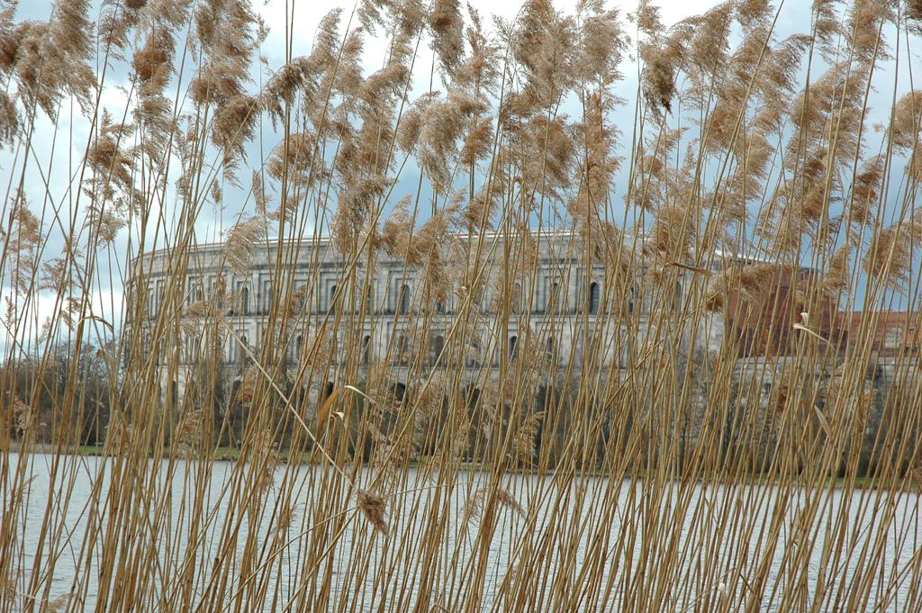 hinter hohem Ufergras am See auf dem Reichsparteitags-Gelände: Kongresshallen-Torso.