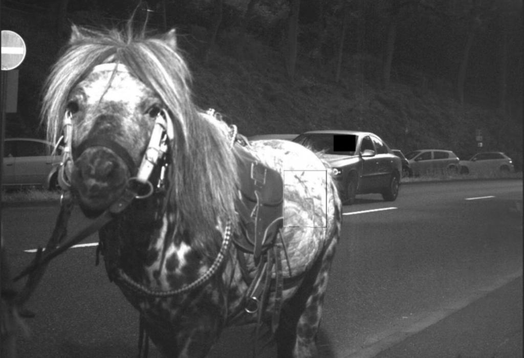 Huch, das war aber hell! Das geblitzte Pony guckt etwas verdutzt