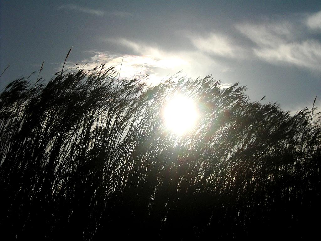 Schilfgras neigt sich, vom Mistral gebeugt, in der Sonne, der Wind fegt Wolkenfetzen übers Land.