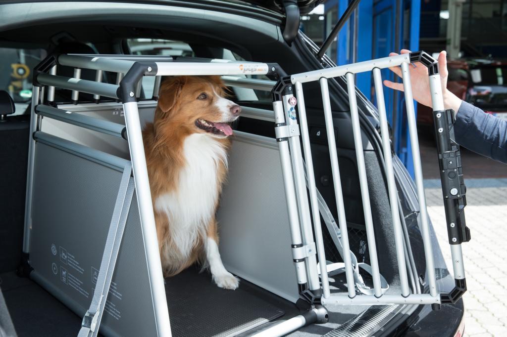 Große und mittelgroße Hunde werden am besten in einer Transportbox untergebracht