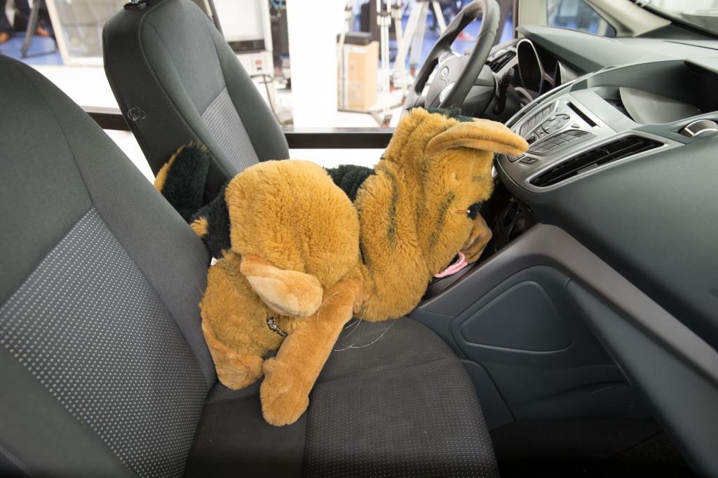 Der Hunde-Dummy, der auf dem Rücksitz saß, wäre als Echt-Hund nicht mit dem Leben davon gekommen