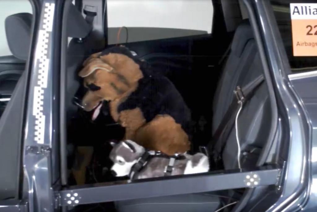 Der kleinere Hunde-Dummy (vorn) war mit einem Geschirr gesichert und kam so glimpflich davon