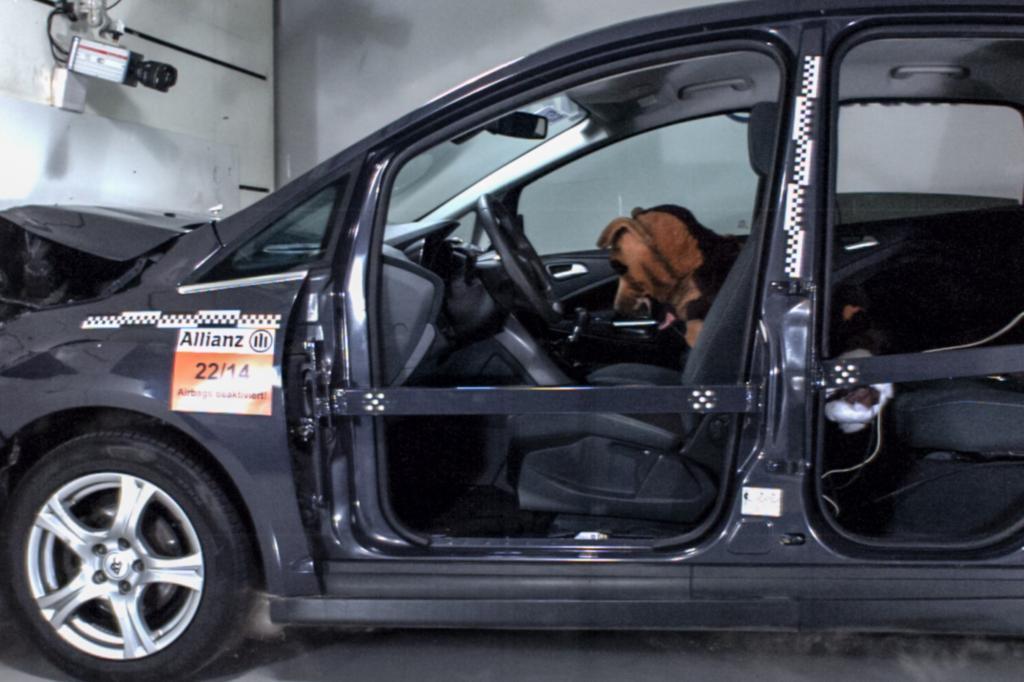 Schäferhund-Dummy Rex, 35 Kilo schwer, flog ungebremst von der hinteren Sitzreihe ins Armaturenbrett