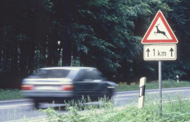 Verliebte Rehe als Gefahr für Autofahrer